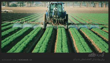 آینده رشته مهندسی کشاورزی چگونه است؟ / ویکی ووک