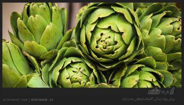 گیاه آرتیشو و خواص آن / ویکی ووک