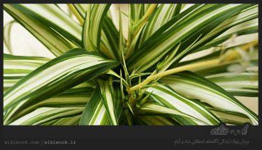 چگونه از گندمی نگهداری کنیم؟ / ویکی ووک