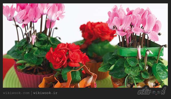 دلایل ریزش گل های سیکلامن و برگ های آن - ویکی ووک