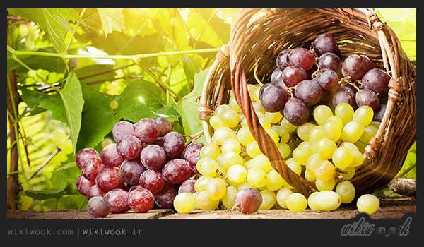 میوههای پرکالری کدامند؟ / ویکی ووک