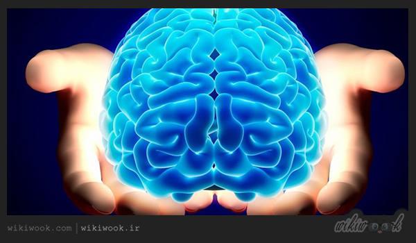 چه عواملی باعث تقویت حافظه می شود؟ / ویکی ووک