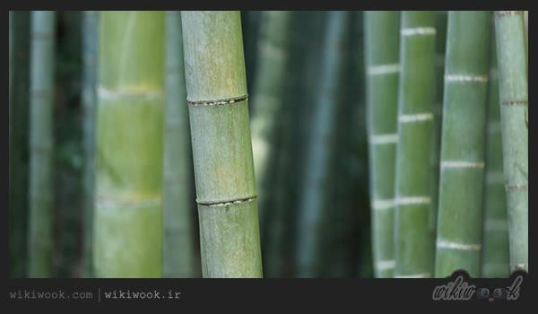 داستان انگیزشی شماره 41 - درخت بامبو / ویکی ووک