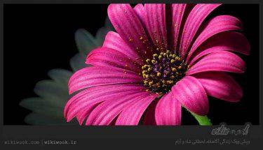 داستان انگیزشی شماره 88 - درویش / ویکی ووک