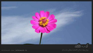 داستان انگیزشی شماره 106 - لذت های اخروی / ویکی ووک