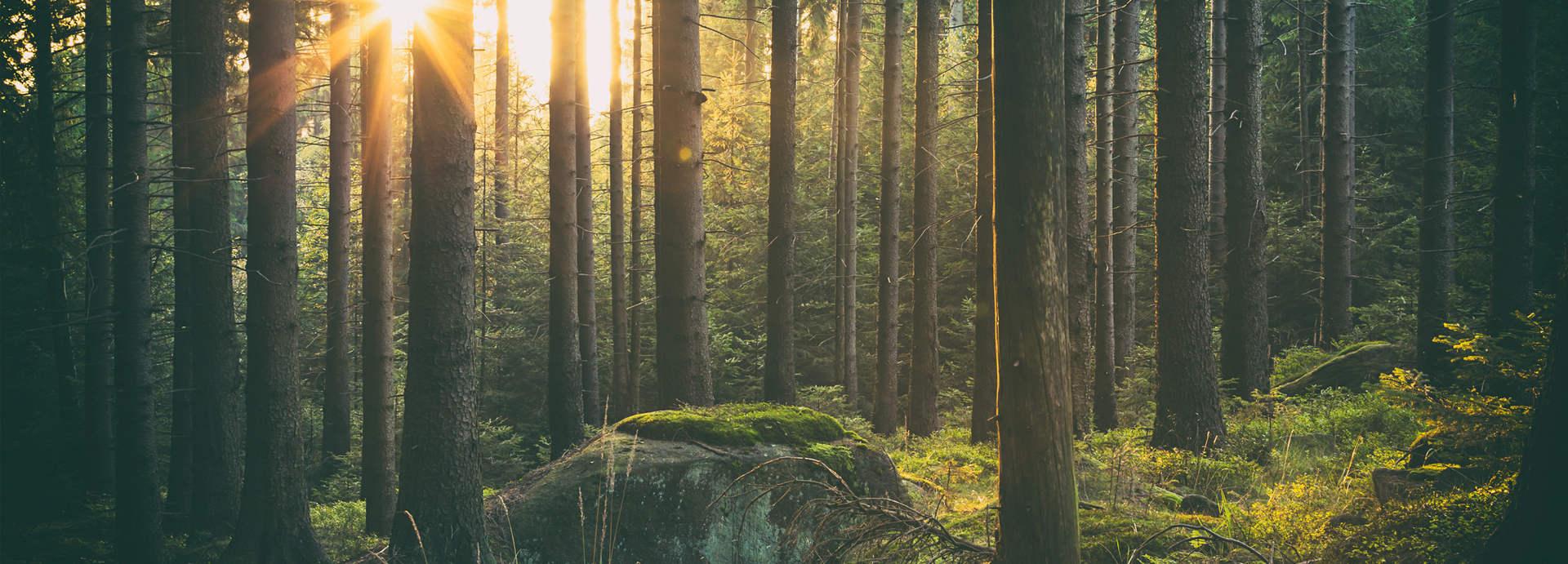 طبیعت جنگل - ایران