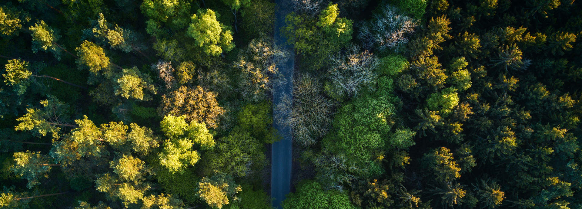 طبیعت درختان ویکی ووک