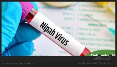 ویروس نیپا چیست؟ / ویکی ووک