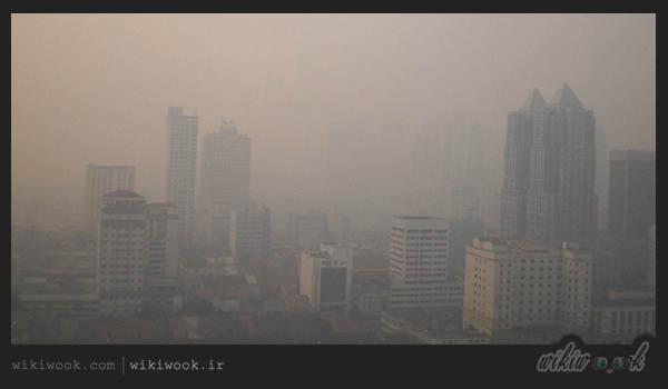 هنگام آلودگی هوا چه بخوریم؟ / ویکی ووک