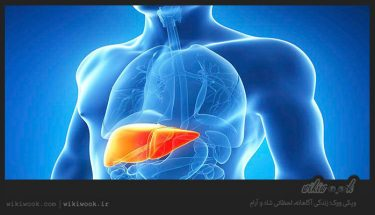 چگونه سیستم تنفسی را تقویت کنیم؟ / ویکی ووک