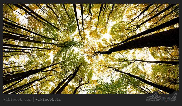 داستان انگیزشی شماره 8 – درخت خودخواه / ویکی ووک