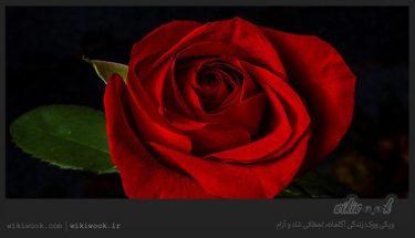 متن کوتاه انگلیسی درباره بوی عاشقانه / ویکی ووک