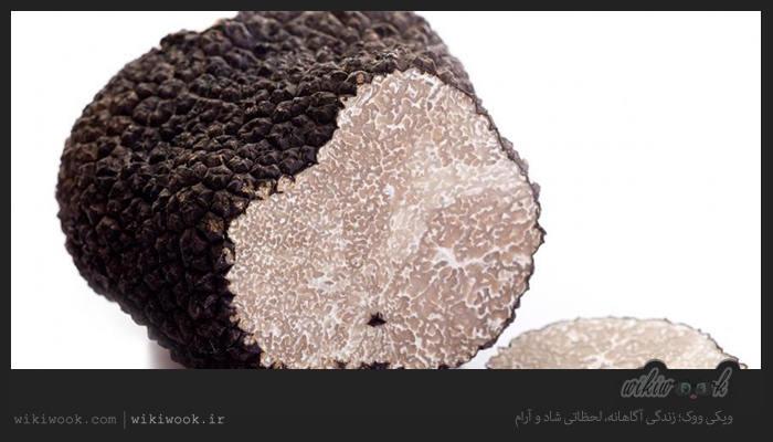 قارچ دنبلان و خواص آن / ویکی ووک
