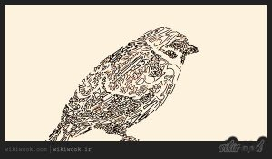 داستان کوتاه انگلیسی سلطان پرندگان