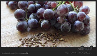 هسته انگور