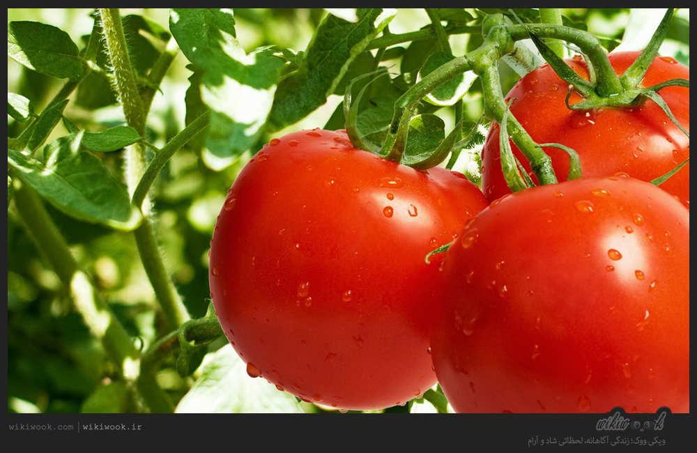 خواص گوجه فرنگی - ویکی ووک