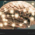 چگونه مغزی فعال داشته باشیم؟ / ویکی ووک