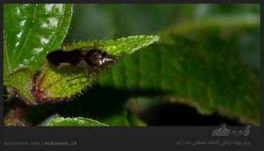 داستان انگیزشی شماره 54 - موجودات زیبا / ویکی ووک