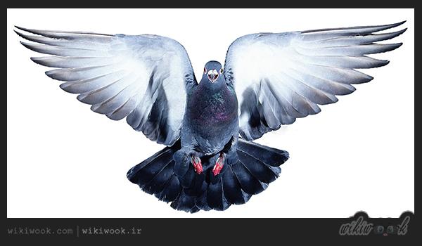داستان انگیزشی شماره 7 - بالهای پرواز / ویکی ووک