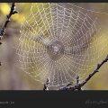 داستان انگیزشی شماره 48 - تار عنکبوت / ویکی ووک