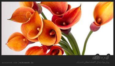 داستان انگیزشی شماره 52 - دسته گل برای مادر / ویکی ووک