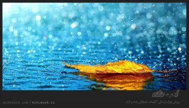 داستان انگیزشی شماره 13 – قطرات باران / ویکی ووک