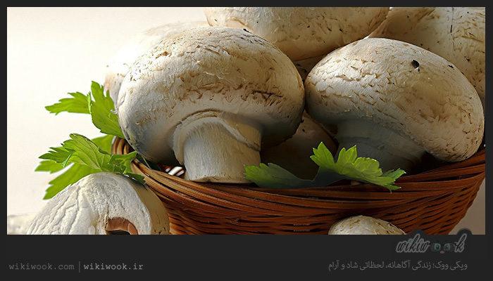 قارچ و خواص آن / ویکی ووک