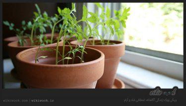 معرفی و کاشت گیاهان خوراکی مناسب آشپزخانه و شرایط آن - ویکی ووک
