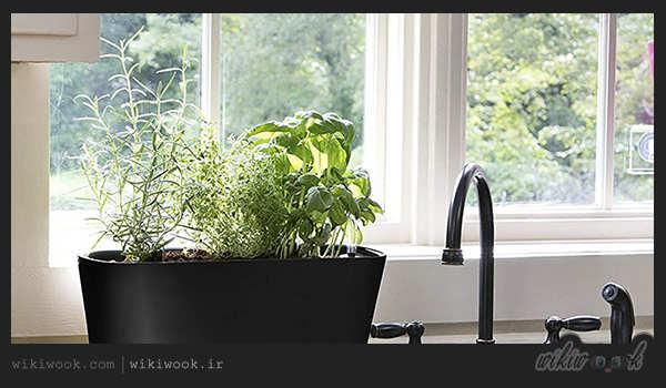 شرایط کاشت گیاهان خوراکی در آشپزخانه و نکات قابل توجه آن - ویکی ووک