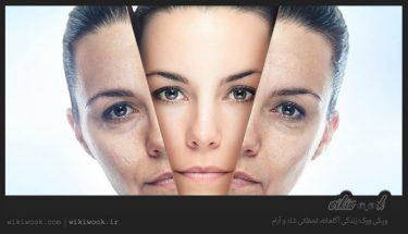 لایه بردارهای پوست