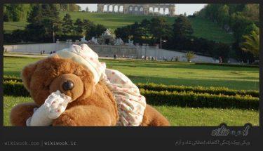 داستان کوتاه انگلیسی ماجراجویی تدی میخوانیم. این داستان درباره ی خرس عروسکی است که طی ماجراهای به مدرسه صاحبش میرود. این داستان بصورت کلمه کلمه ترجمه نشده است