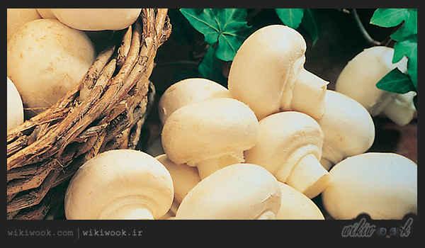 سوپ قارچ و شیر را چگونه درست کنیم؟ / ویکی ووک