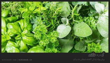 چگونه سبزی را تازه نگه داریم؟ / ویکی ووک