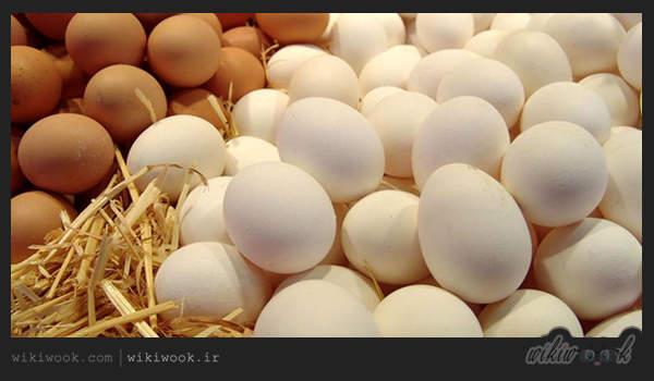 آیا تخم مرغ قهوهای و سفید باهم تفاوت دارند؟ / ویکی ووک